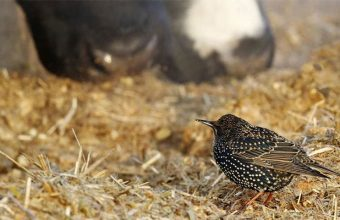 Starling Management